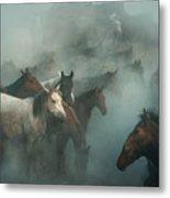 Lost Horses Metal Print