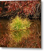 Lost In A Sea Of Color Metal Print