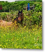 Lost In Buttercups Metal Print