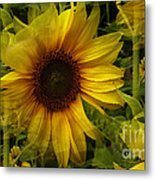 Lost In The Crowd Metal Print