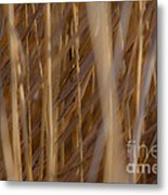 Lost In The Reed Metal Print