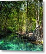 Lost Lagoon On The Yucatan Coast Metal Print