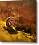Lost Shell Metal Print