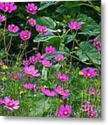Lots Of Cosmos Metal Print