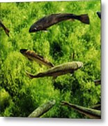 Lots Of Trout Metal Print