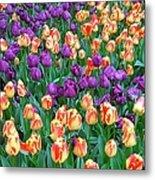Lots Of Tulips Metal Print