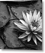 Lotus 2 Metal Print