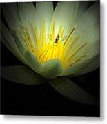 Lotus And Bee Metal Print