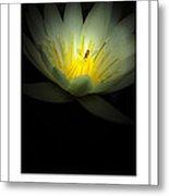 Lotus And Bee Poster Metal Print