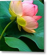Lotus Blossom And Leaves Metal Print by Byron Varvarigos