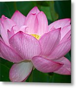 Lotus Drops Metal Print