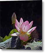 Lotus Enchantment Metal Print