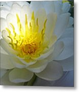 Lotus Metal Print by Etti PALITZ