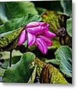 Lotus Flower- Gungarre Billabong Metal Print