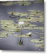 Lotus Flower- Gungarre Billabong V3 Metal Print
