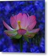 Lotus Flower In Blue Metal Print