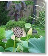 Lotus Flower In Lily Pond Metal Print