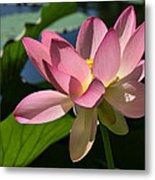 Lotus - Flowers Metal Print