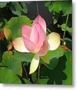 Lotus I Metal Print