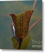 Lotus Leaf Metal Print