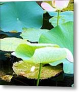 Lotus Lilly Pond Metal Print