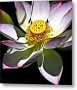 Lotus Of The Night Metal Print