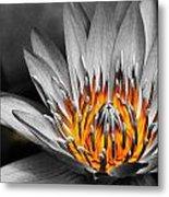 Lotus On Fire Metal Print