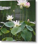 Lotus Patch Metal Print
