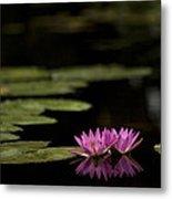 Lotus Reflections Metal Print