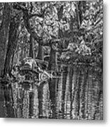 Louisiana Bayou - Bw Metal Print