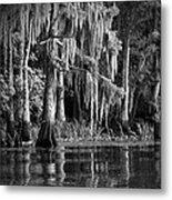 Louisiana Bayou Metal Print by Mountain Dreams