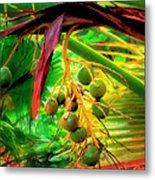 Loulu Palm Metal Print