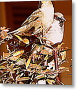 Love Birds II Metal Print