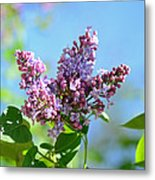 Love My Lilacs Metal Print