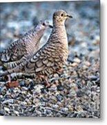 Love Peck Metal Print