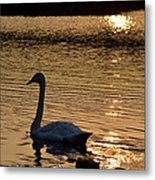 Love Will Lead You Back Metal Print