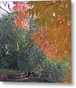 Lovely Autumn Colors Metal Print