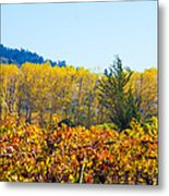 Lovely Fall Colors Metal Print