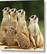 Lovely Group Of Meerkats Metal Print