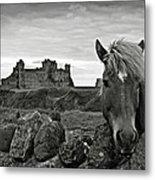 Lovely Horse And Tantallon Castle Metal Print