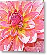 Lovely In Pink - Dahlia Metal Print