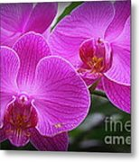 Lovely In Purple - Orchids Metal Print