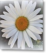 Lovely In White - Daisy Metal Print