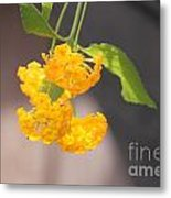 Lovely Lantana Metal Print