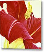 Lovely Lily Floral Print Metal Print