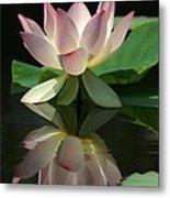 Lovely Lotus Reflection Metal Print