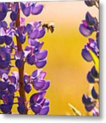 Lovely Lupins And Busy Bee Metal Print
