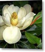 Lovely Magnolia Metal Print