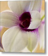 Lovely Orchid Metal Print