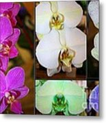 Lovely Orchids - A Collage Metal Print